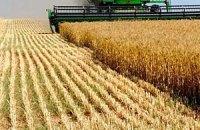 Дожди стопорят уборку зерна в Украине