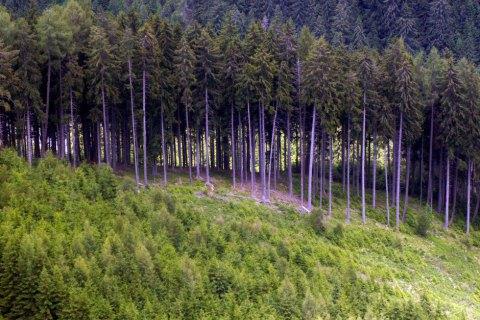 У 2020 році рослинному світу України завдано близько 312 мільйонів гривень збитків