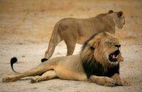 Зімбабве виставляє на продаж диких тварин через посуху