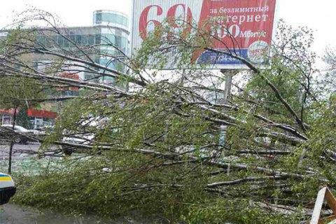 Внаслідок падіння дерева загинула жінка