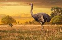 В Крыму нашли кости гигантской ископаемой птицы весом до 450 кг