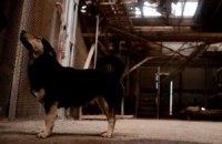 В Одессе построят крематорий для животных