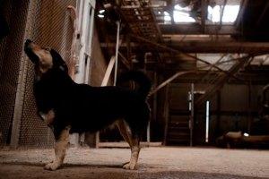 Под Симферополем собака загрызла маленькую девочку