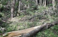 На Хмельниччині буревій пошкодив ліс більш як на ста гектарах