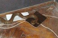 Харків'янка знайшла під ліжком пітона