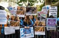 В Нью-Йорке намерены запретить продажу фуа-гра из-за жестокого обращения с птицами