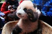 Пятничная панда #67
