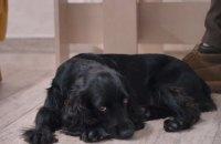ФСБ в Крыму пыталась объявить террористом собаку