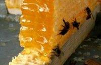В Евпатории может появиться музей пчеловодства