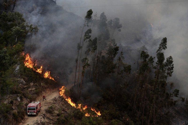 Из-за жары в Португалии начались лесные пожары