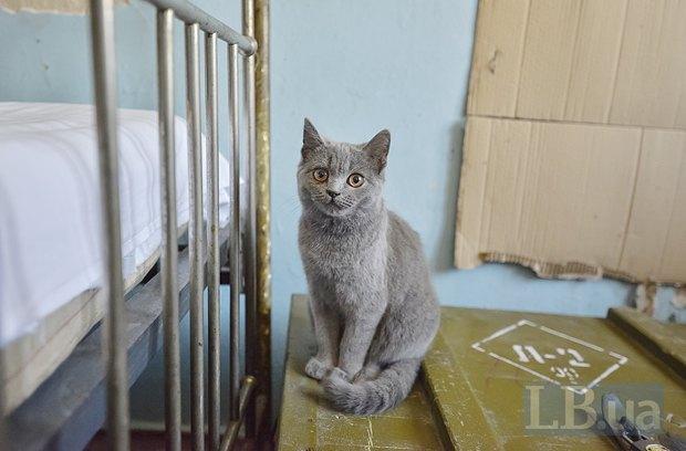 Кошка Василиса появилась в части с приездом Лены.