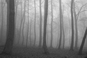 На Уралі в лісі знайшли 50 людських ембріонів