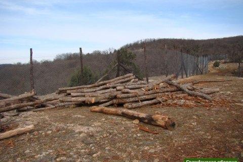 Луценко вимагає від прокурорів на місцях не допустити вирубування лісу