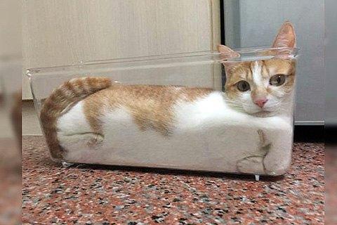Шнобелівську премію присудили за дослідження рідкої природи котів