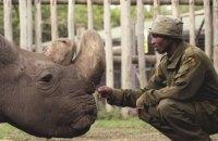 Последний самец северного белого носорога умер в возрасте 45 лет в Кении