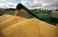 В Украине начали уборку кукурузы