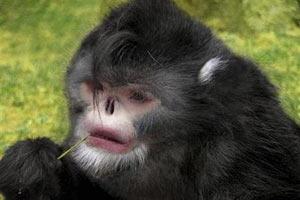 Найдены неизвестные науке обезьяны, чихающие при дожде