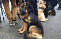 Нацполіція дезінфікує лапи службовим собакам через коронавірус