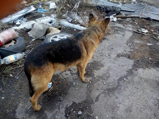 """Рекс - собака из """"Республики Мост"""""""