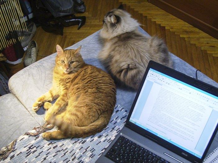 Кузьма та Клім (котики автора, текст присвячується їм)