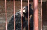 На базе отдыха под Харьковом медведь напал на уборщицу