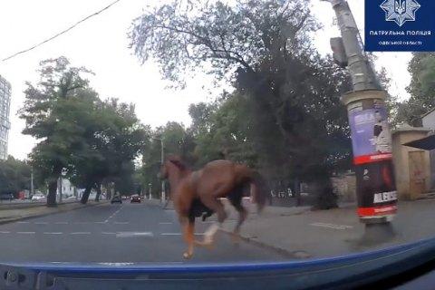 В Одессе патрульные остановили лошадь на скаку