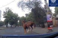 В Одесі патрульні зупинили коня, який вибіг на дорогу