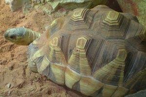 У контрабандистов изъяли самых редких черепах на земле