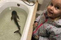 """Одесский дельфинарий """"Немо"""" спас акулу из местной гостиницы"""