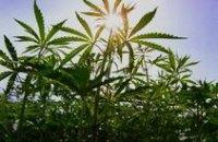 В Днепродзержинске у безработного изъяли 4 кг марихуаны
