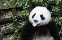П'ятнична панда #87
