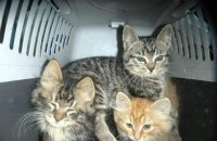 В Киевской области девушка заморила голодом более 20 домашних животных