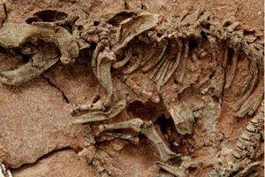 Под Пекином обнаружили сотни окаменелых следов динозавров