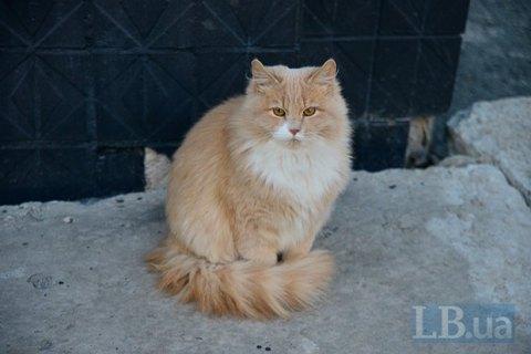 Во Львове впервые в мире подсчитают уличных котов