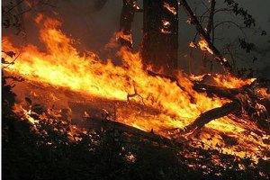 У Криму біля Ялти горить ліс