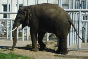 У зоопарку Харкова слониха покалічила працівника