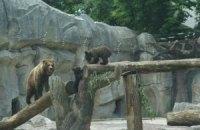 В Киевском зоопарке выбрали имена для новорожденных медвежат