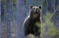 За последние 40 лет на Земле вдвое уменьшилось число диких животных