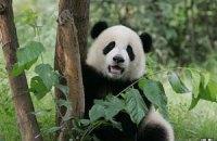 Пятничная панда #41