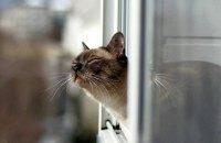В Херсоне котов признали частью экосистемы города