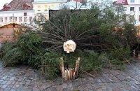 Таллинскую полицию попросили разобраться с падением елки