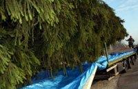 Украинская елка доставлена в Рим