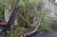 В Одессе непогода ломает деревья и переворачивает автомобили