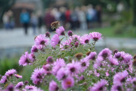 Красноярцев ожидают солнечные ижаркие выходные: воздух прогреется до +31°C