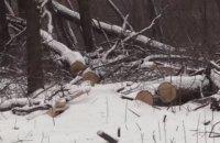 Под Волновахой уничтожили дубов на 7,5 млн гривен