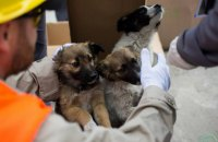 С территории Чернобыльской АЭС в США вывезут 200 бездомных щенков