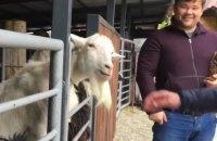 Экс-глава Офиса президента обругал козла в зоопарке и надавал ему по ушам
