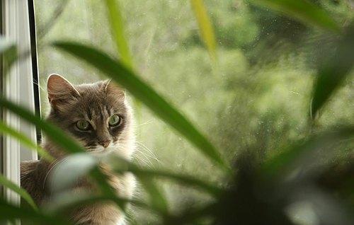 Кішка Мурка від читачки Марічки