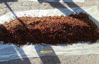 В Ровенской области изъяли янтаря на ₴1,5 млн