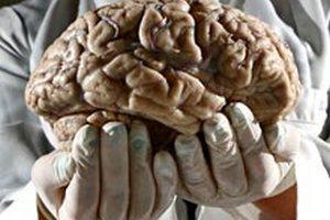 Мозг человека не стареет, утверждают ученые